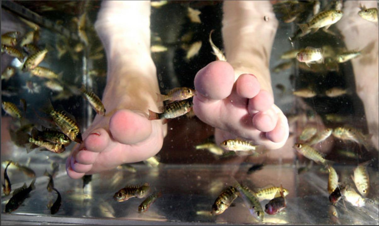 The Feel of Fishy Feet